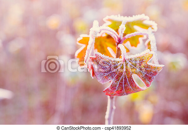 Frozen autumn leaves - shallow depth of field - abstract vibrant background - csp41893952