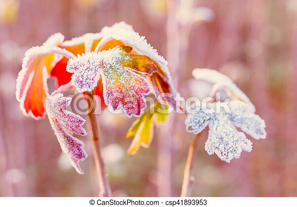 Frozen autumn leaves - shallow depth of field - abstract vibrant background - csp41893953