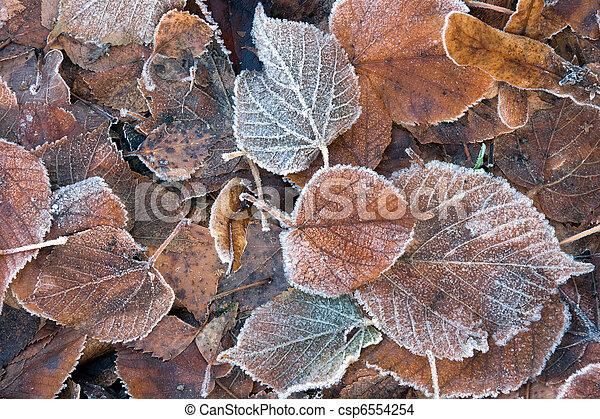 Frozen brown leaves - csp6554254
