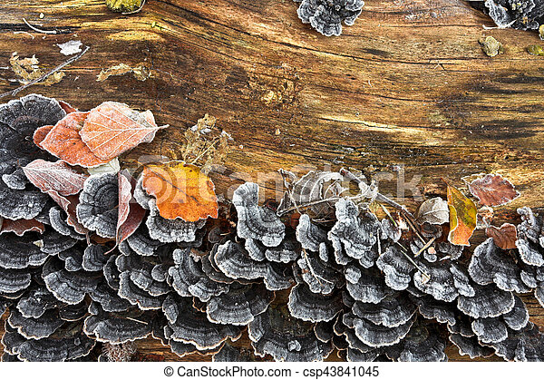 Frozen brown winter leaves and mushroom - csp43841045