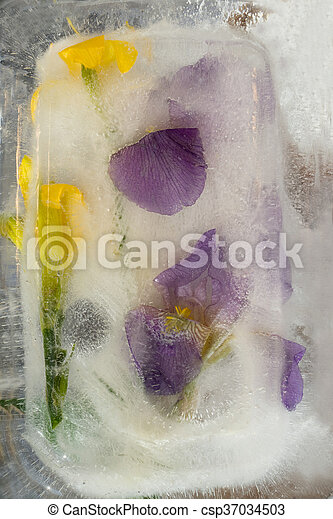 Frozen flower of iris - csp37034503
