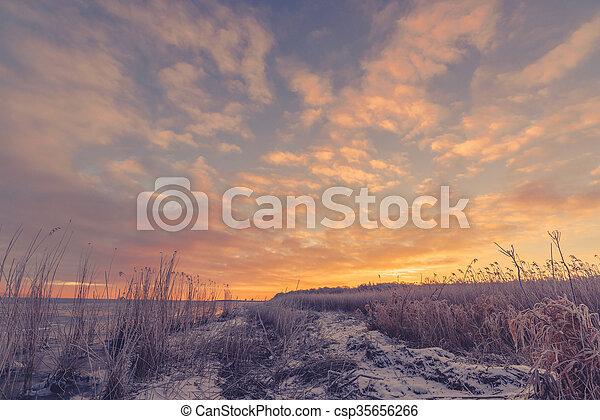 Frozen grass at the sea shore - csp35656266