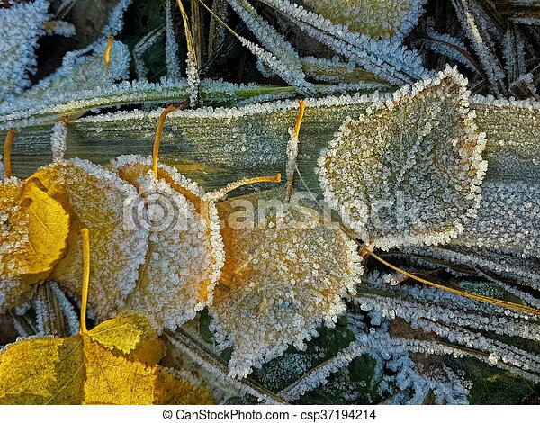 Frozen leaves - csp37194214