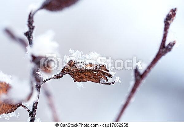 Frozen leaves - csp17062958
