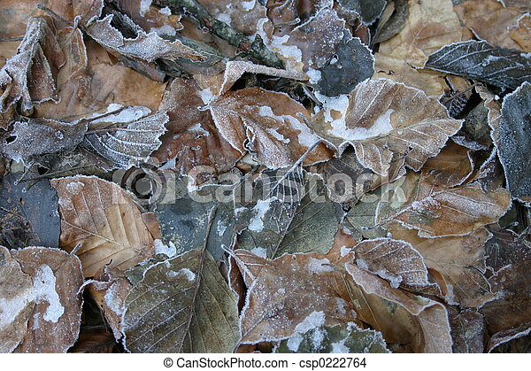 frozen leaves - csp0222764