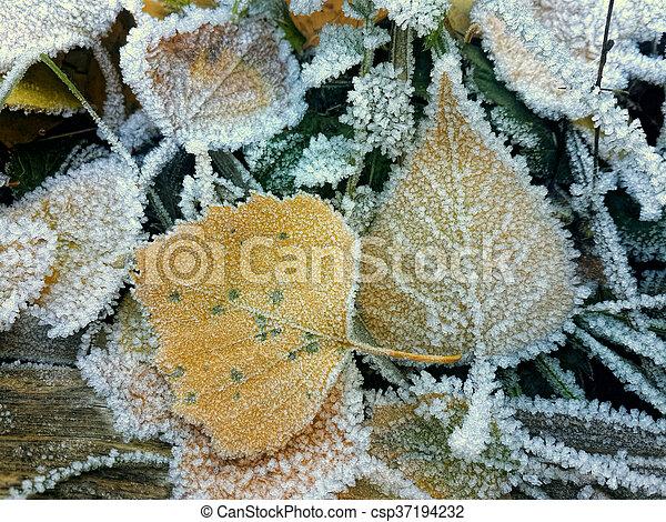 Frozen leaves - csp37194232