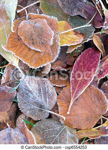 Frozen leaves - csp6554253