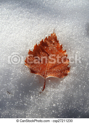 Frozen oak leaves laying in the snow - csp27211230