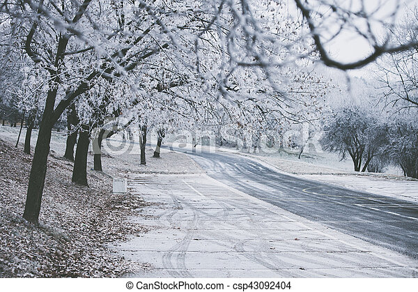 frozen path and trees - csp43092404