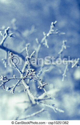 Frozen Tree Branches - csp10251362