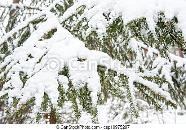 Frozen tree in the winter forest - csp10975297