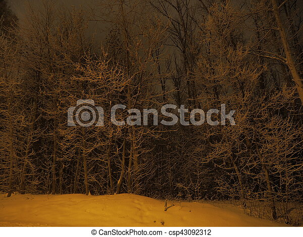 Frozen trees view - csp43092312