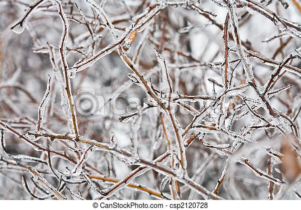 frozen twig - csp2120728