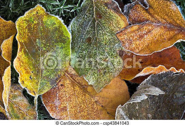 Frozen winter leaves - csp43841043