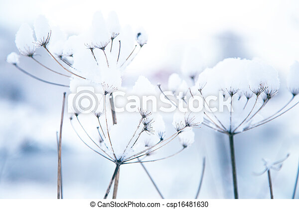 frozen winter plants  - csp16481630