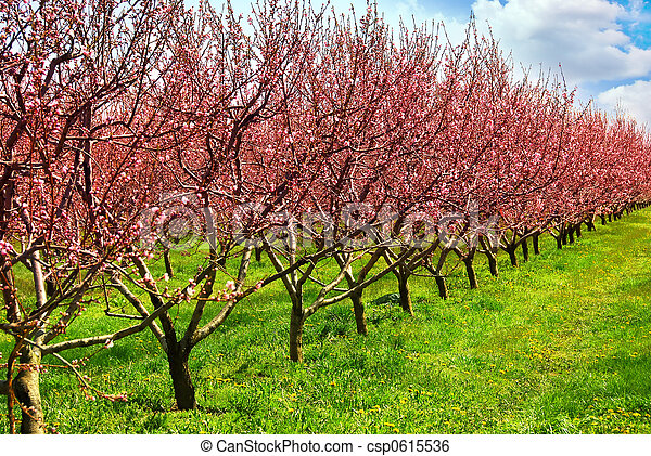 frucht obstgarten - csp0615536