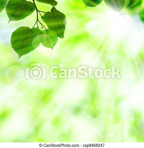 fruehjahr, blätter, sonne, grün, balken - csp8468247