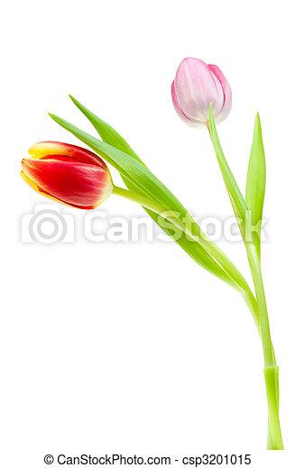 fruehjahr, bunte, tulpen - csp3201015