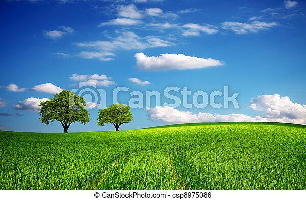 Grünes Feld im Frühling - csp8975086