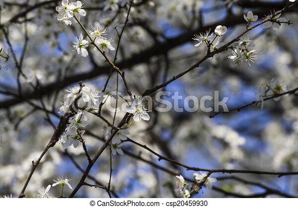 Fruehjahr, weisse blumen, bäume Zeichnungen - Suche Clipart ...