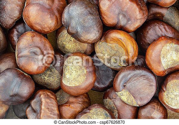 fruit brown chestnut edible closeup many fruits large mouth-watering source protein edible - csp67626870