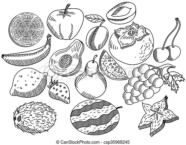 Fruits coloring book vector for adults