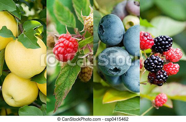 Frutas - csp0415462
