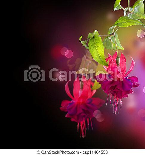 Fuchsia Flowers - csp11464558