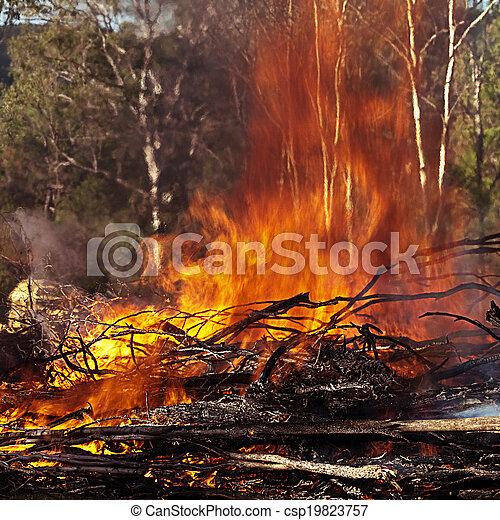 Fuego ardiente en el arbusto australiano - csp19823757