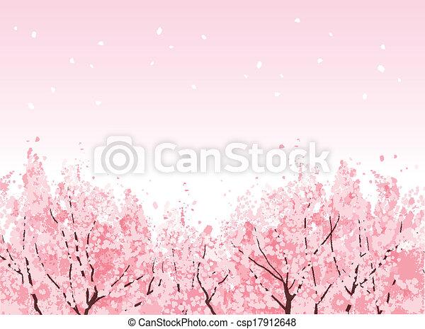 Full bloom of beautiful Cherry blossom trees - csp17912648