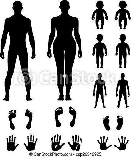 Full length front, back human - csp26342925