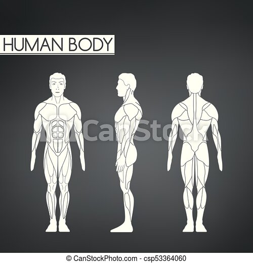 Full length muscle body, front, back view of a standing man - csp53364060