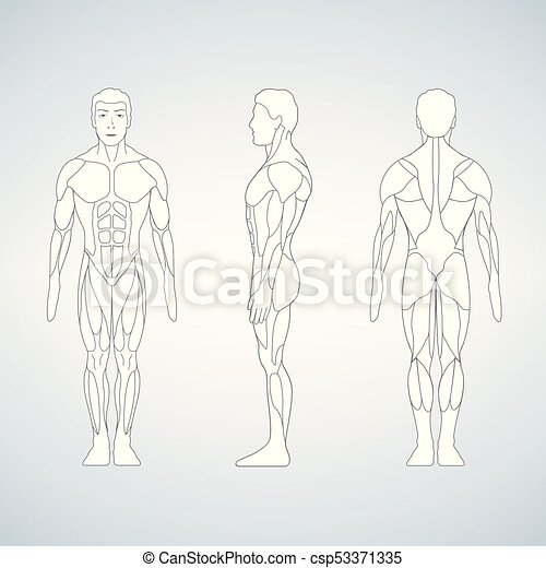 Full length muscle body, front, back view of a standing man - csp53371335