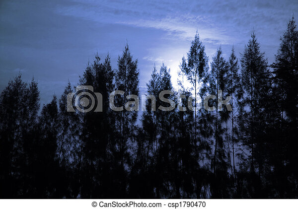 Full Moon and Pine - csp1790470