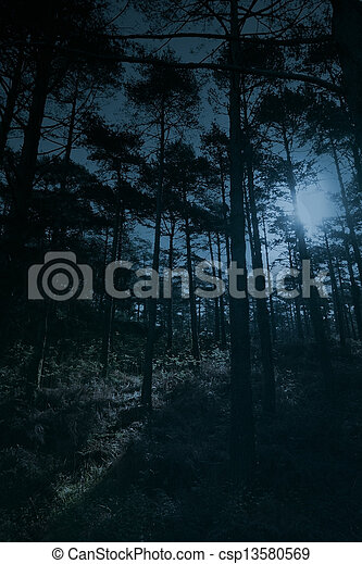 Full moon forest - csp13580569