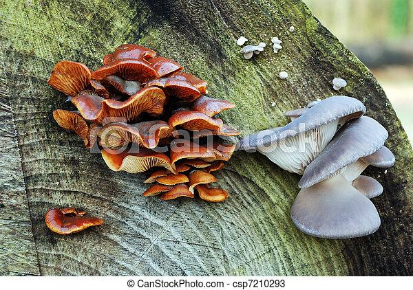 funghi - csp7210293