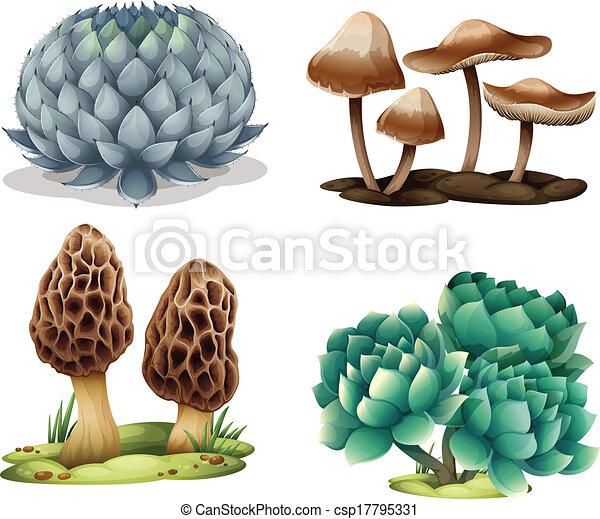 funghi, cactus - csp17795331