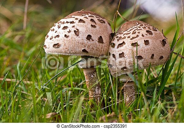funghi, funghi, foresta - csp2355391