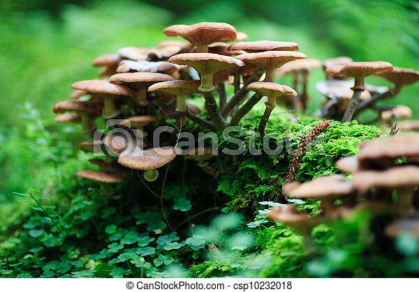 funghi - csp10232018
