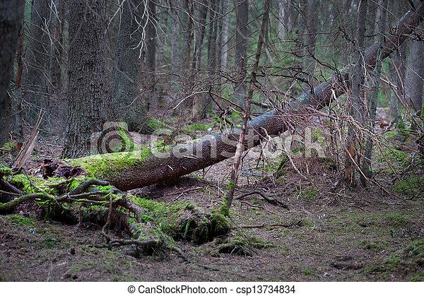 fungo, árvore caída - csp13734834