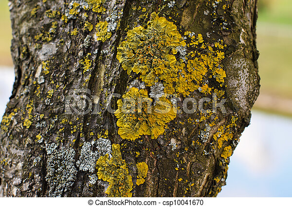 Fungus arbre jaune mousse coffre olive mousse image recherchez photos clipart - Mousse sur les arbres ...