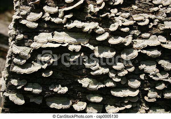 Fungus or oysters? - csp0005130