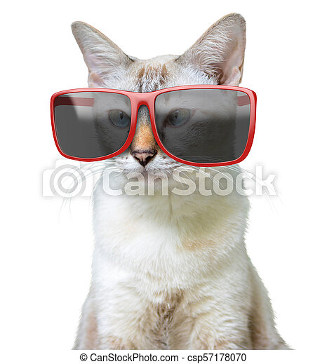 Funny Animal Portrait Of A Cool Cat Wearing Big Oversized Red Sunglasses Isolated On White Funny Animal Portrait Of A Cool,Hacks Space Saving Ideas For Small Apartments