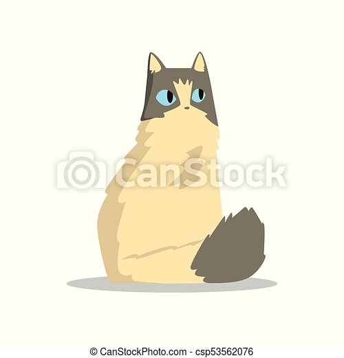 Funny beige puffy cat with gray markings on head and tail. Domestic animal with big blue eyes. Cartoon pet character. Flat vector design for sticker or greeting card - csp53562076