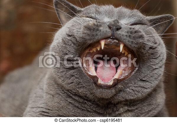Funny cat - csp6195481