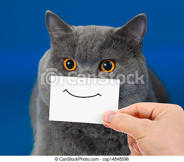 funny cat portrait with smile on card - csp14848596