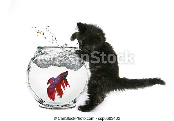 Funny Cat Trying to Catch a Fish - csp0683402