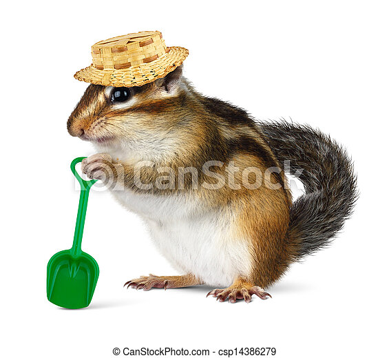 Funny chipmunk with straw hat and shovel - csp14386279