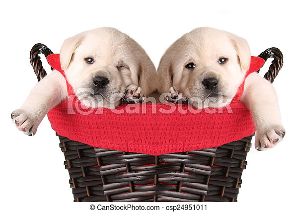 Merry Christmas Puppies.Funny Christmas Puppies