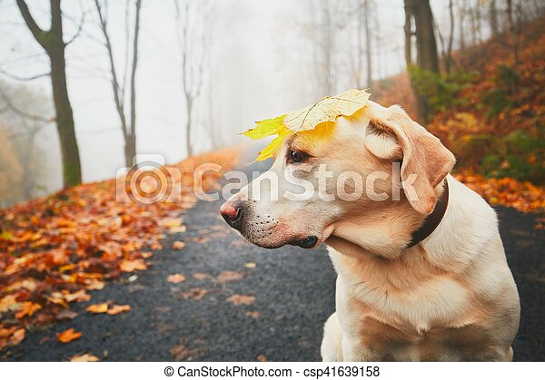 3a9c253db07 Funny dog in autumn